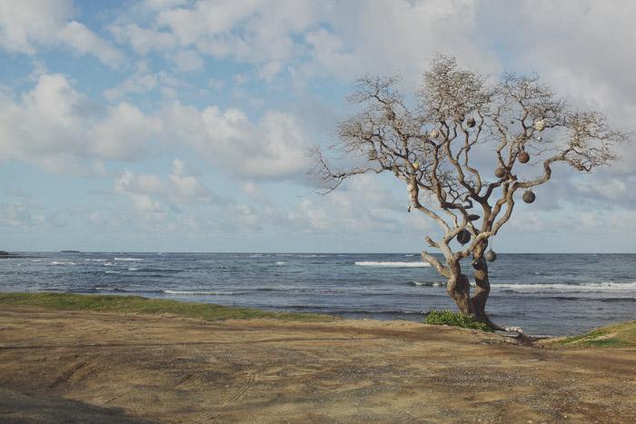 Oahu-142