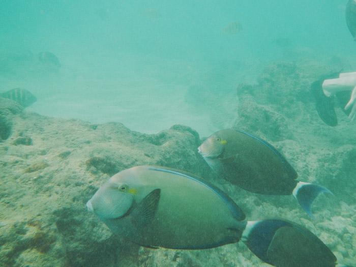 Oahu-286